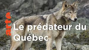 Echapper aux loups | Une année dans le Canada sauvage