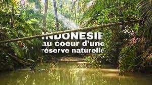 Indonésie : voyage unique au cœur d'une réserve naturelle