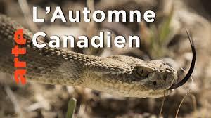 Documentaire L'Automne Spectaculaire du Nord | Une année dans le Canada sauvage
