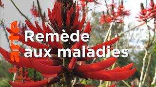 Documentaire Le génie des plantes | En Amérique du Sud