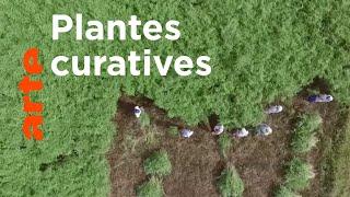 Documentaire Le génie des plantes | En Inde