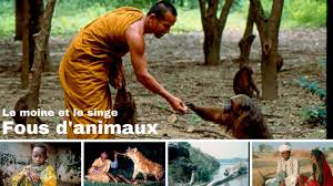 Documentaire Le moine et le singe – Fous d'animaux
