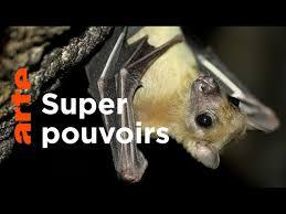 Documentaire Les chauves-souris : fascinantes et menacées