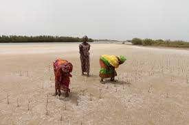 Documentaire L'impact du réchauffement climatique au Sénégal ! La vie secrète des mangroves