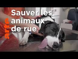 Documentaire Vétérinaire des sans-abris