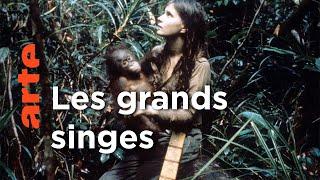A la rencontre des grands singes ! | Six femmes sur la planète des grands singes (Episode 1)