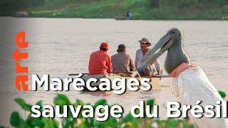 Documentaire Brésil – La vie sauvage dans les marécages du Pantanal |  Voyages aux Amériques