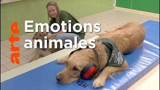 Documentaire Ce que ressentent les animaux