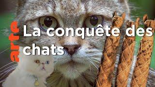 Documentaire Comment le chat a conquis le monde  ?