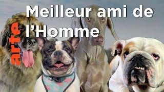 Documentaire Comment le chien a conquis le monde ?