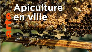 Documentaire Comment les sauver les abeilles ?