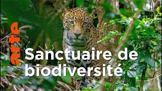 Documentaire Costa Rica : le retour des animaux