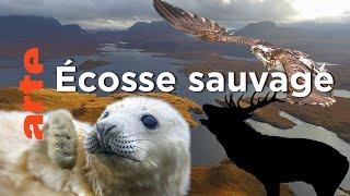 Documentaire Écosse, la quête du sauvage