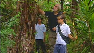 La Réunion : la forêt des cyclones