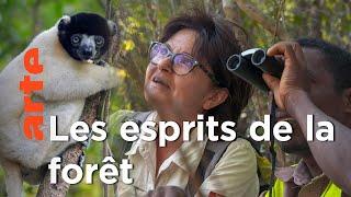 Documentaire La forêt aux esprits à Madagascar   La vie secrète des mangroves
