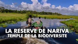 Documentaire La réserve de Nariva, temple de la biodiversité