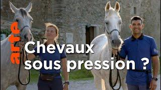 Documentaire La santé du cheval mise à l'épreuve
