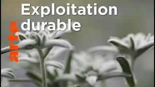 Documentaire Le génie des plantes | Dans les Balkans