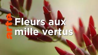 Documentaire Le génie des plantes | En Provence