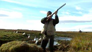 Documentaire Les oies sauvages de Patagonie