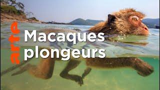 Documentaire Les singes qui voulaient voir la mer