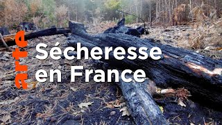 Documentaire Quand les arbres ont soif, la forêt brûle