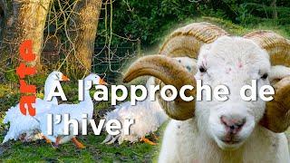 Documentaire À l'abri de l'Hiver | La vie cachée des animaux de la ferme