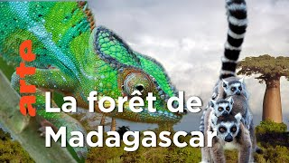 Au Cœur de Madagascar | Voyage en îles tropicales