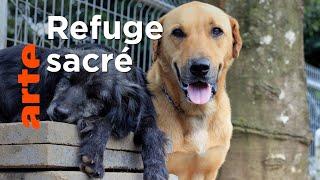 Au Costa Rica, un paradis pour les chiens abandonnés