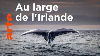 Documentaire Baleines et requins en eaux profondes
