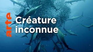 Cinquante nuances de requins