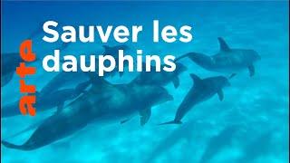 Documentaire Comment protéger les dauphins en Méditerranée ?