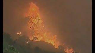 Incendies en Grèce : les miraculés du Péloponnèse