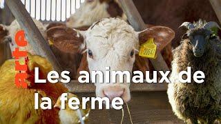 Documentaire La vie cachée des animaux de la ferme