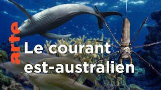 Les Tropiques | Australie, l'odyssée océanique
