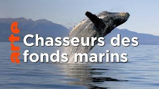 Les super-prédateurs des mers (1/3) | L'union fait la force
