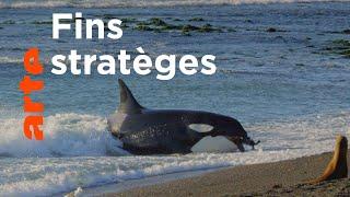 Les super-prédateurs des mers (2/3) | Chasses en territoire hostile