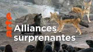 Les super-prédateurs des mers (3/3) | S'adapter ou mourir