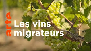 Documentaire Quand le riesling met le cap au nord