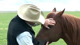 Quand les chevaux murmurent à l'oreille des hommes
