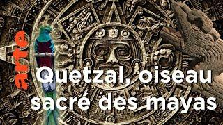 Sauver le Quetzal, l'oiseau sacré des Mayas - Guatemala