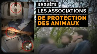 Documentaire Animaux en péril : ces vétos qui se mobilisent