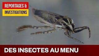 Des insectes au menu - Une solution au problème de la faim dans le monde?