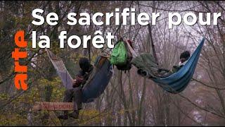 Documentaire Des militants au secours de la forêt