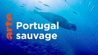 Entre terre et océan : la diversité des écosystèmes portugais