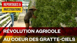 Fermiers du futur - L'agriculture en ville