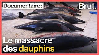 France : le massacre des dauphins