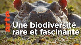 Hippopotames et tortues des îles Bijagos | Guinée-Bissau