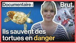 Ils sauvent des tortues en danger
