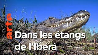 La renaissance d'Iberá en Argentine | Les nouveaux mondes sauvages